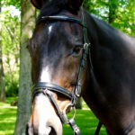 Waverly Dressage Bridle by Five Star Tack