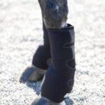 Ice Horse Evendura