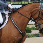 five star tack signature equine breastplate