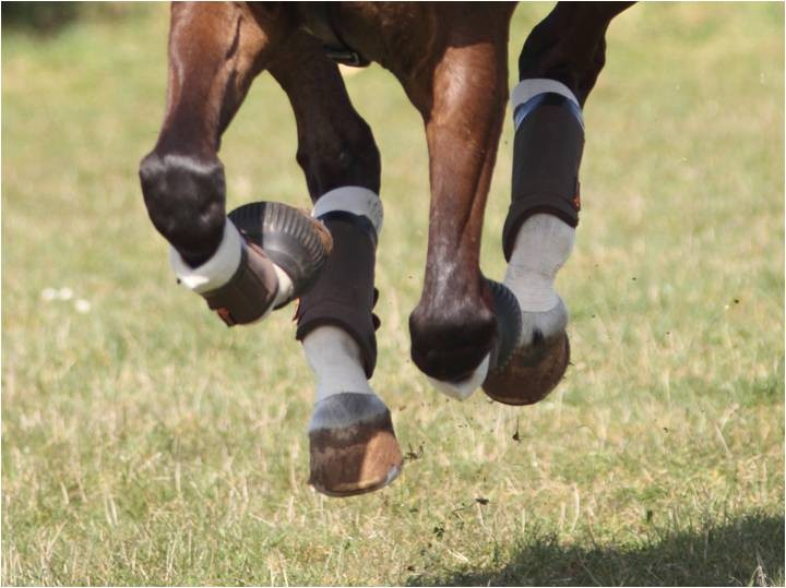 Kentucky Tendon Grip And Tendon Grip Gel Horse Socks