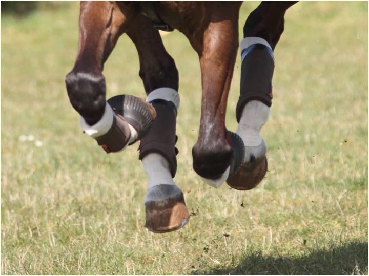 Kentucky Tendon Grip And Tendon Grip Gel