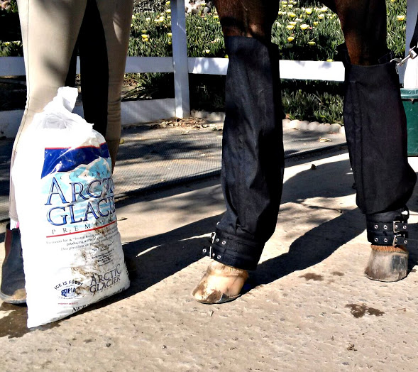 Equine Ice Boots