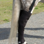 Ice Horse Full Hind Leg Equine Cold Wrap