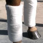 Equine Leg Wraps & Quilts
