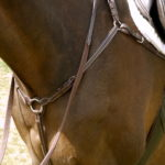 Five Star Tack Horse Breastplate