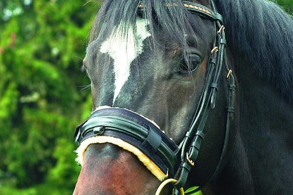 Bridle Noseband Cover By Christ Lammfelle Non Bleached