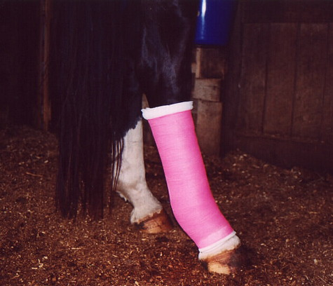 Vet Wrap For Horses by 3M, Self-Adhesive Bandage