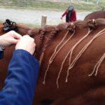 Horse Braiding Supplies