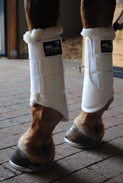 Dressage and Flatwork Boots