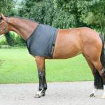 back on track shoulder guard for horses