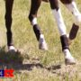 Majyk Equipe Color Elite Cross Country Boots