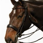 rolled double bridle