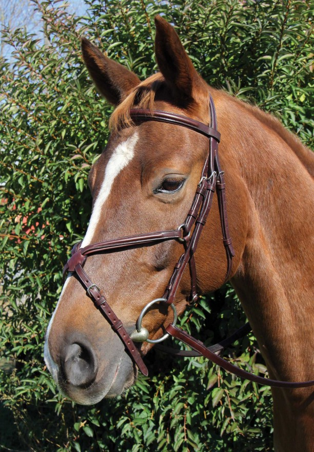 Raised Figure 8 Bridle Voyager By Vespucci Four Star