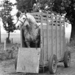 Horse Trailering